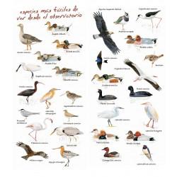 Conoce las aves con SEO BIRDLIFE