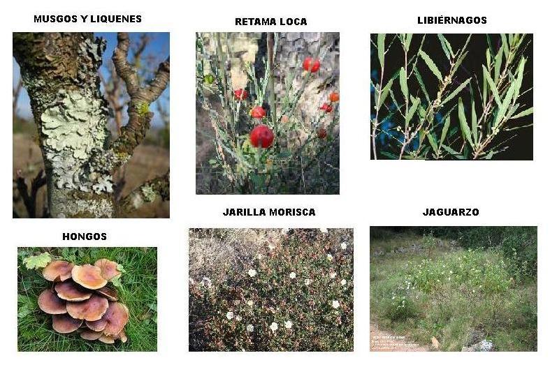 Ruta 1 parque dunar - Nombres de arbustos ...