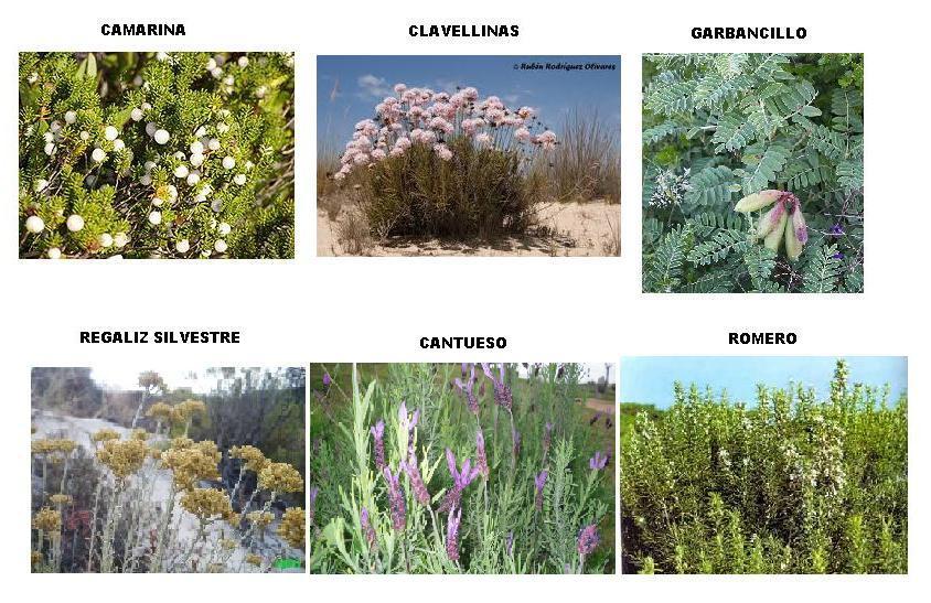 Arbustos con nombres de tipos pictures to pin on pinterest - Nombres de arbustos ...